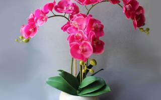 У орхидеи сохнут корни возможно ли реанимировать растение