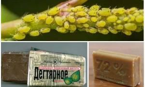 Защита огорода от вредителей народными средствами сода уксус мел дегтярное мыло