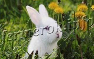 Какие добавки необходимо давать кроликам