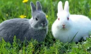 Какой травой кормить кроликов?