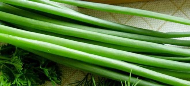 Применение зеленого лука полезные свойства и противопоказания