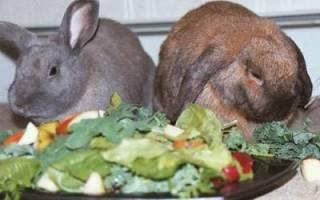 Можно ли давать кроликам свежие и солёные огурцы