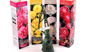 Как посадить саженцы роз из коробки