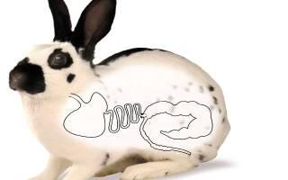 Почему кролик скрипит зубами и не ест