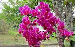 Как выращивать орхидеи из семян в домашних условиях?