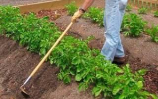 Нужно ли окучивать огородные растения?