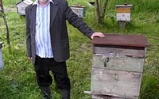 Особенности содержания пчел и самостоятельное изготовление улья варрэ
