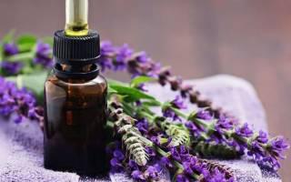 Чем полезна сальвия применение и свойства шалфея лекарственного