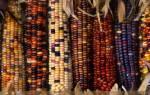 Разновидности кукурузы