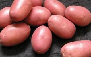 Суперранние ранние и среднеранние сорта картофеля