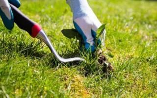 Злейшие враги огорода список наиболее распространенных сорняков
