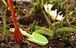 Удобрение голубиным пометом
