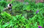Лучшие водные растения для пруда
