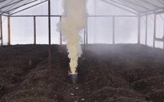 Как обработать помещение и грунт теплицы после зимы от вредителей и болезней