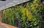 Особенности выращивания комнатных лиан с фото и названиями