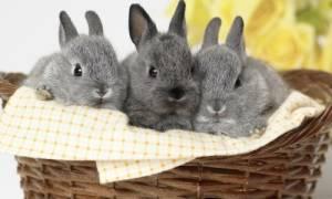 Декоративный кролик воняет причины что делать