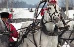 Хакамора для лошади