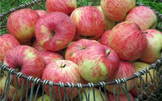 Все самое важное о сорте яблок бельфлеркитайка