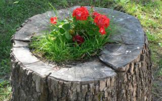 Как украсить пень от дерева на дачном участке