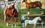 Мышастая масть лошади история разновидности окраса