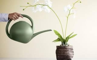Что делать если вянут листья у орхидеи фаленопсис основные причины увядания