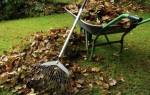 Осенний уход за газоном и подготовка к зиме