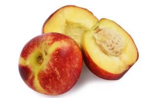 Все о нектарине чем полезен фрукт для человеческого организма