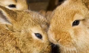 Почему кролики плохо растут и не набирают вес