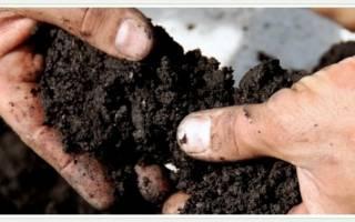 Что такое от чего зависит и как повысить плодородие почвы