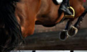 Подковы для лошадей виды правила подковки