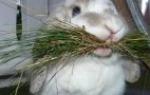 Можно ли кормить кур капустой