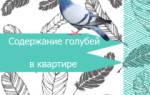Вольские голуби особенности содержания в домашних условиях