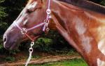 Грива у лошади функции и правильный уход
