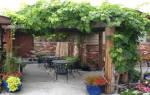Описание и секреты успешного выращивания винограда арочный