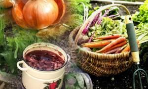 Применение луковой шелухи для растений в саду и огороде
