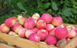 Плюсы и минусы яблони сорта штрейфлинг посадка и уход