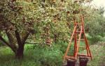 Осенняя обработка яблонь